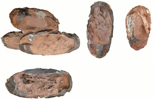 Photos of the clutch of three oviraptorid eggs including embryos before preparation and separation of the individual eggs