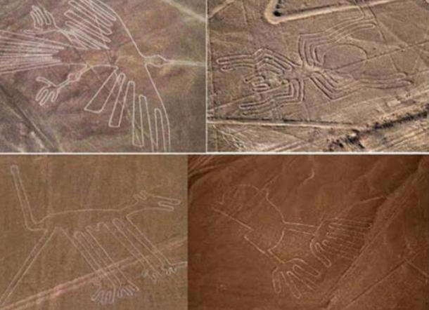 A collection of Nazca geoglyphs including a humming bird (top left) and monkey (bottom left).