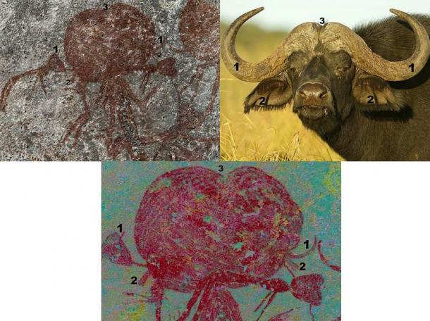 Comparison of the head of figure 059 (top left) and African buffalo (top right) and close-up of the digitally enhanced photograph (using DStrech) showing finer detail and superimposed layers.
