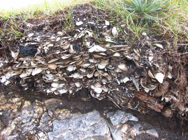 A midden, composed of shells, animal bones etc. providing insights into life on the island.