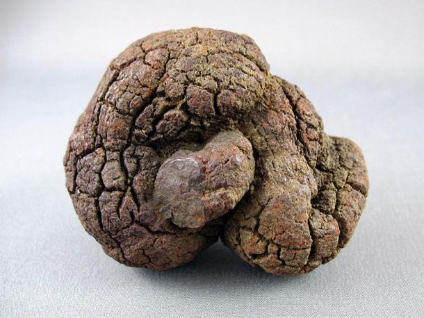 Fossil coprolite from the Whitemud Formation in Saskatchewan, Canada. (CC0)