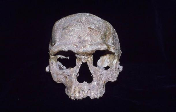 This cranium from Jebel Irhoud in Morocco is often called a modern human ancestor. The topic of human ancestry is carefully examined in a new study.