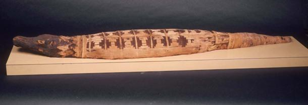 A crocodile mummy.