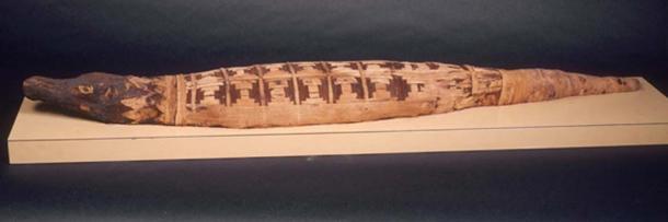 A crocodile mummy