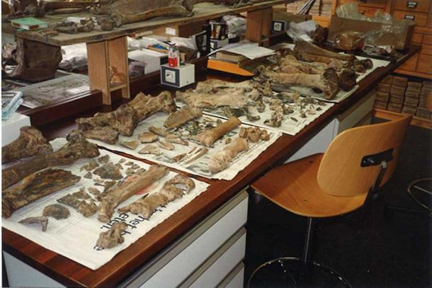 Archaeozoologist's desk full of bones (CC BY-SA 4.0)