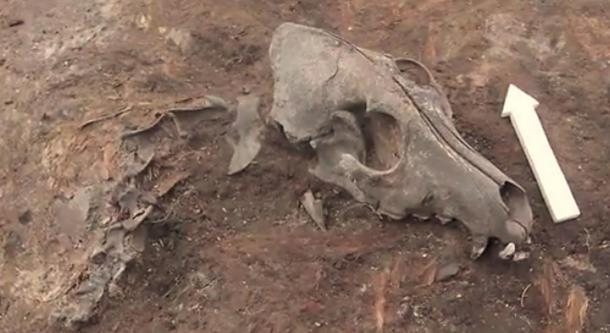 A dog burial.