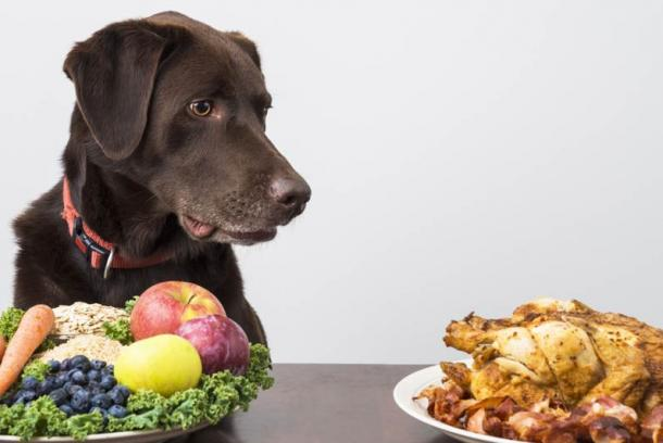 The British Veterinary Association announced that vegetarian diets are not designed to meet the needs of your pet.