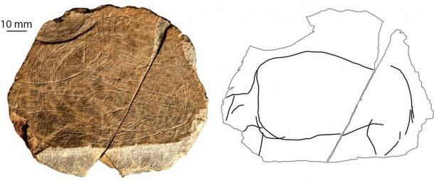 """A """"drawing"""" of a wild-cow animal found at the Jersey site. The right side of the image isolates the depiction of the animal, so that one can see it as an individual creature. (S Bello/ Natural History Museum)"""