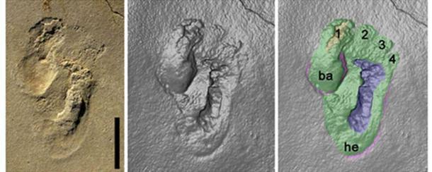 The early hominin footprints discovered on Crete. Credit: Matthew Robert Bennett