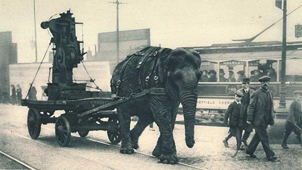 An elephant pulling machinery during WWI, Sheffield. (Public Domain)