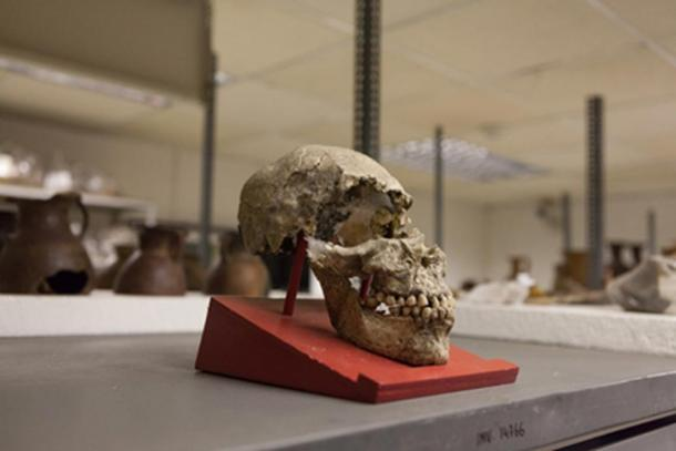 An elongated skull from Father Crespi's collection.
