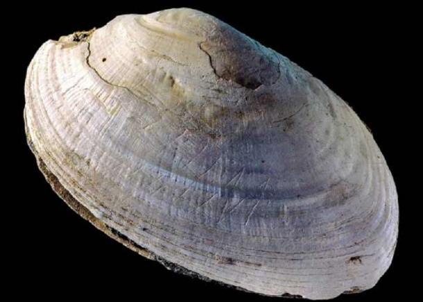 This etched shell from Java is considered to be the oldest symbolic engraving, dating back about 500,000 years! (Wim Lustenhouwer / VU University Amsterdam)