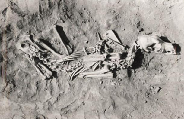 An example of a dog burial.