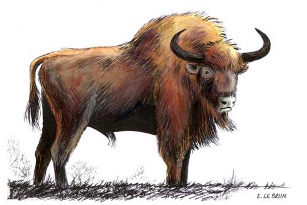 Illustration of the now extinct auroch