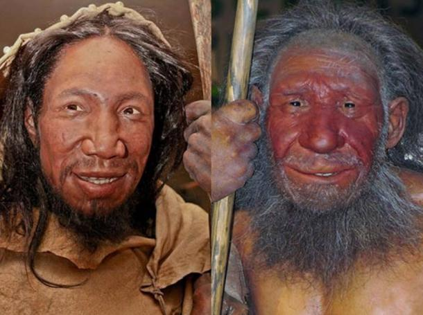 Comparison of faces of Homo sapiens and Neanderthal