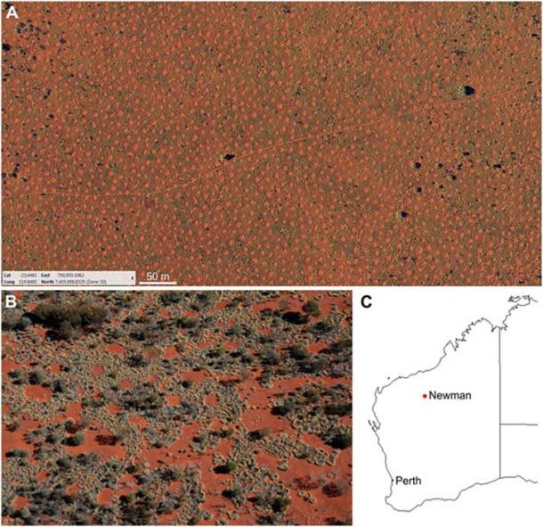 The fairy circles of Australia: (A) Aerial image of the regularly spaced gaps. (B) Self-organized formation of the gap pattern. (C) Map of Western Australia where the fairy circles can be found to the east and south of the mining town Newman.