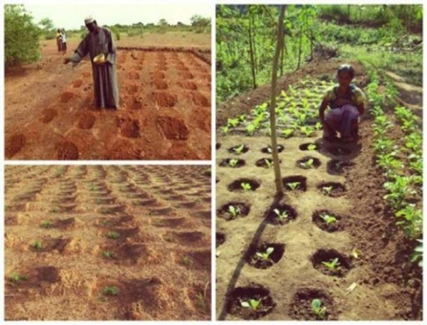 Zaï farming technique.