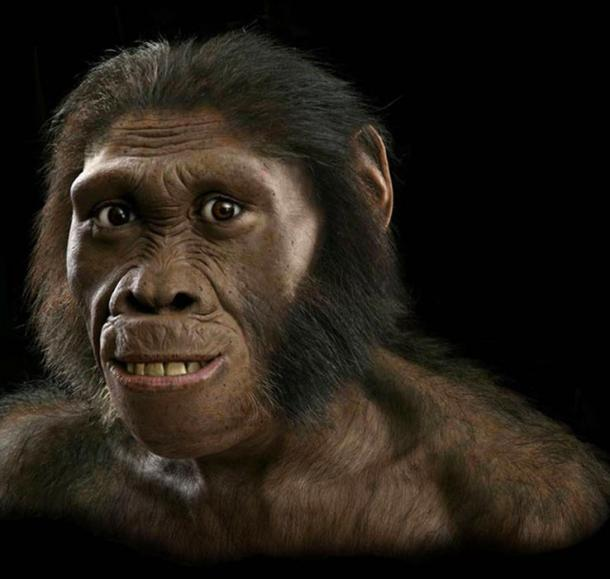 This female Australopithecus sediba model by John Gurche shows how such early human relatives may have looked.