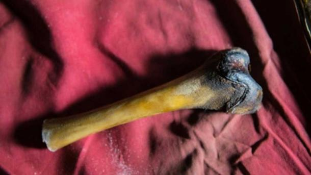 "A femur bone from the decayed body of a purported Yeti found in a cave in Tibet. Biologist Charlotte Lindqvist tested DNA from the bone for Icon Films' ""YETI OR NOT"" TV special, which aired on Animal Planet in 2016. (Image: Icon Films Ltd.)"