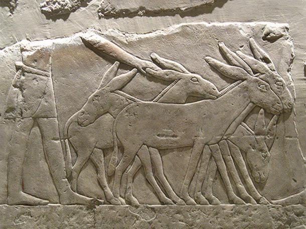 Ancient Canaanites Imported Animals from Egypt to be Sacrificed