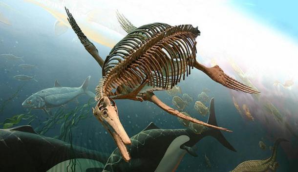 Elasmosaurus Skeleton Ancient Sea Monsters: ...
