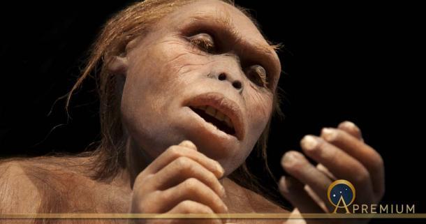 Australopithecus Afarensis (procy_ab / Adobe Stock)