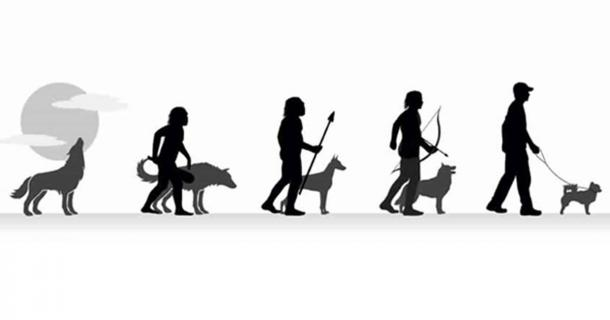 the history and evolution of dogs essay Gray wolfwikimedia, martin mecnarowskidomestic dogs evolved from a  group of wolves that came into contact with european.