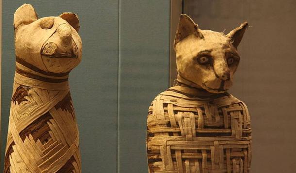 mysterious mummified predator baffles experts