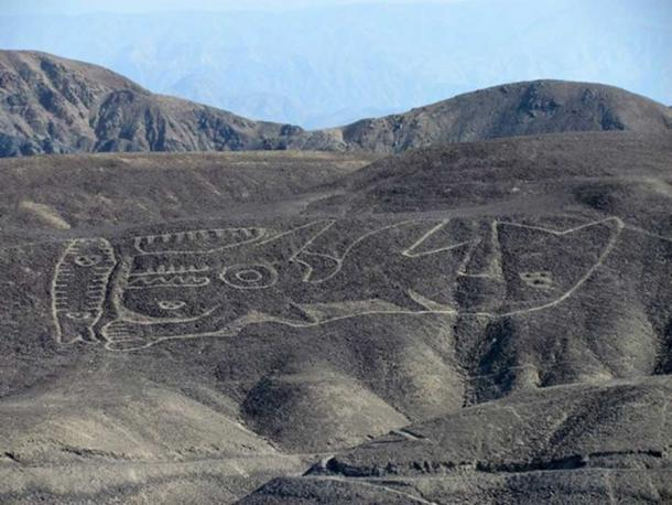 The rediscovered orca geoglyph lies on a desert hillside in the remote Palpa region of southern Peru.