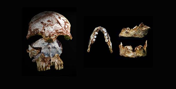 Prehistoric Skull and ...