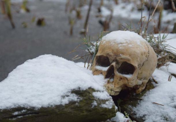 Skull in the snow. Credit: Antje / Adobe Stock