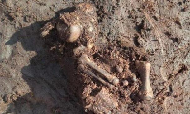 Ancient bog body found in Ireland may be Iron Age sacrifice