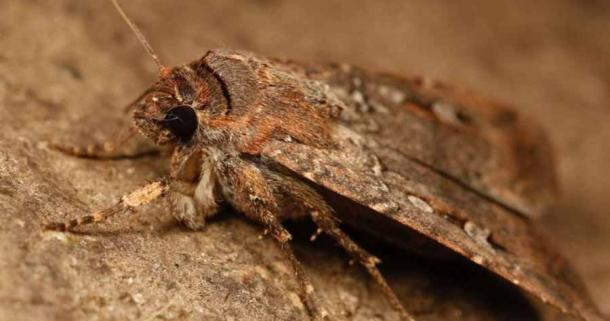 Researchers in Australia have discovered ancient moth remains in an eastern Victoria cave, shedding light on a traditional food that was prepared 2,000 years ago.