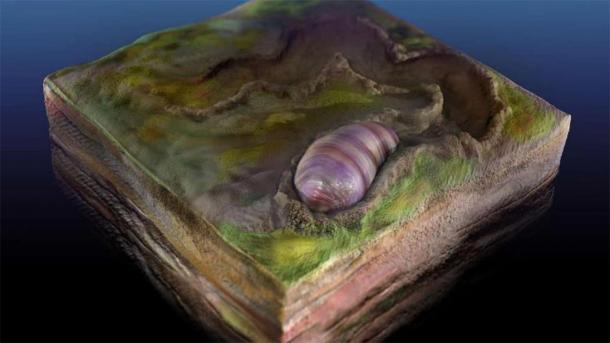 An artist's rendering of the ancient wormlike creature called Ikaria wariootia. Source: Sohail Wasif/UCR