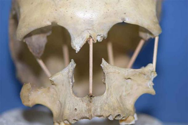Genetic Study of Romanian Skull Upends Previous Theories of Evolution
