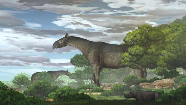 A color drawing of the largest rhino ever based on the remains found in Linxia, China.