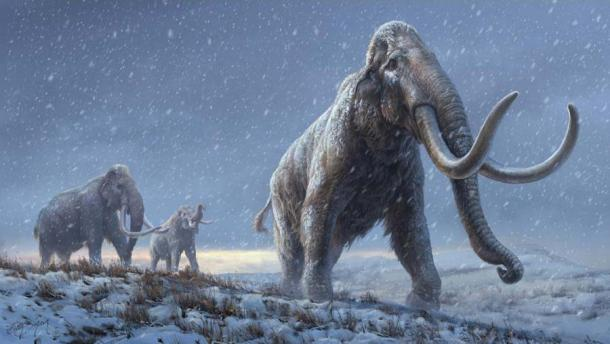 Mammoth DNA Breaks Record for World's Oldest Sequence