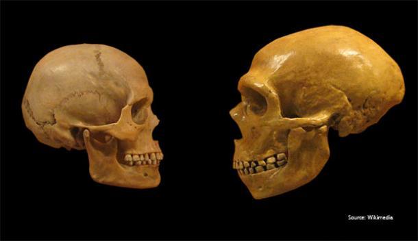 evidence genetics ancient neanderthals