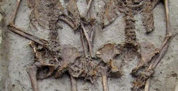 Hand- Holding Skeletons Were Both Men And No, They Were Not Gay Lovers Ancient Origins