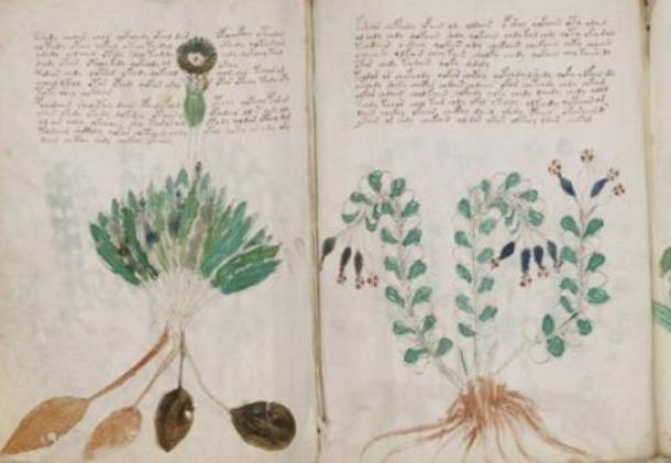 Mysterious Voynich manuscript  `genuine message`