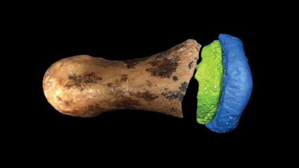 The Denisovan finger bone found at the Denisova Cave in 2008. (E.A. Bennett / Science Advances)