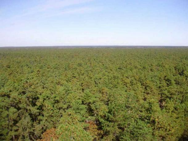 View north from a fire tower on Apple Pie Hill in Wharton State Forest, the highest point in the New Jersey Pine Barrens. (CC BY 3.0) The Jersey devil allegedly inhabited this region.