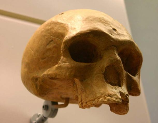 The florsibad Homo heidelbergensis at the David H. Koch Hall of Human Origins at the Smithsonian Natural History Museum.