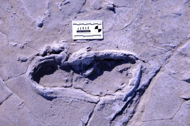 One of the 408 prehistoric footprints preserved at Engare Sero. (William Harcourt-Smith / Nature)