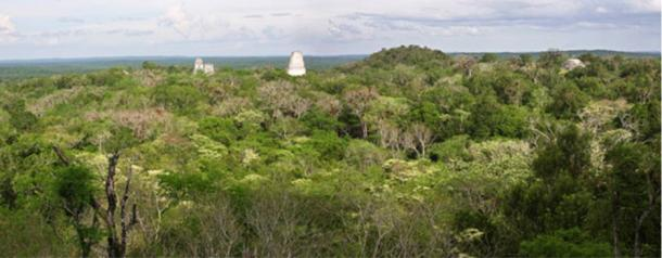 The new study surveyed the forest surrounding Tikal.