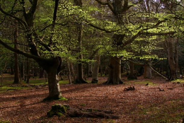 The New Forest National Park were Satanists sacrificed animals. (Jim Champion / CC BY-SA 2.0)