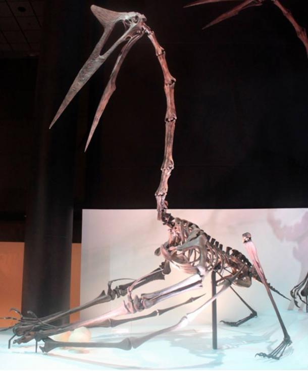 A fossil of Quetzalcoatlus northropi, a pterosaur that lived about 70 million years ago—or more than 69 million years before.