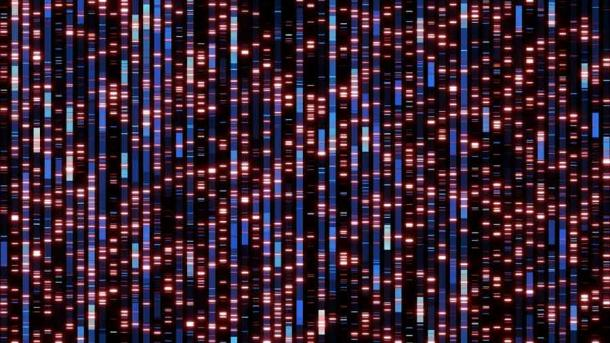 A much better genetic map will likely be produced from this breakthrough in nuclear DNA analysis. (immimagery / Adobe Stock)