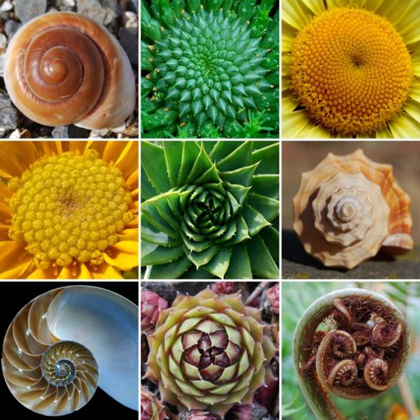 The Golden Ratio – A Sacred Number Linking the Past to the Present Golden-ratio-spiral-in-nature