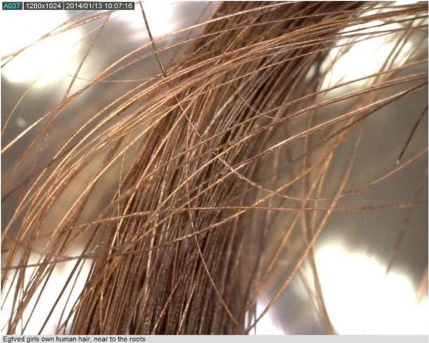 The exceptionally-preserved hair of the Egtved Girl. Her burial dates to 1370 B.C.